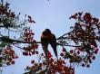 Kakadus - Nähe Kakadu National Park