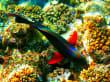 Unterwasserwelt beim Magic Life Hotel