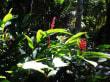 Vegetation beim Wasserfall