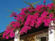 Avis Hotel Xidas Garden - Balcons fleuris