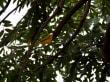 Tapajós Nationalpark