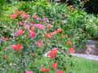 Garten bei der Cenote