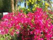 Jardin - SUNRISE Select Royal Makadi Resort