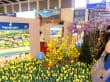 Blumenpracht - Türkei