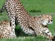 auf der Safari