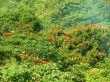 Aussichtspunkt bei Ocho Rios/Jamaika