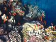Korallen  beim Schnorcheln