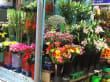 """Blumen auf """" Grünen Markt """""""
