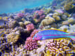 Schnorcheln Makadi Bay