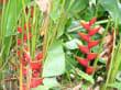 Toll, was auf Grenada so alles wild wächst