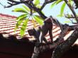 Jardin - Grand Nikko Bali Resort