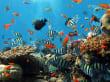 Das Schorchelparadies auf Koh Rock