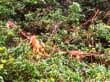 Leguane am Baum