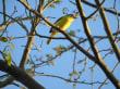 Xaman Ha Bird Park