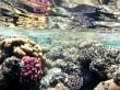 Hotele Shark Bay