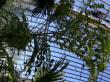 Palmenhaus innen