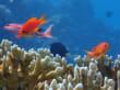 Wunderbares Riff