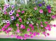 Vor allen Fenstern gibt es schöne Blumen - Hotel Merkur