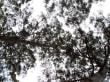Baumspitze mit Aussichtplattform