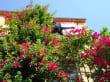 Spaziergang durch die Altstadt von Collioure