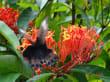 Taman Kupu Kupu - Schmetterlingspark