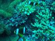 Tagestour mit Poseidon-Cruises