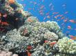Ägyptens Unterwasserwelt