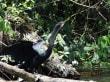 Schlangenvogel während der Bootstour