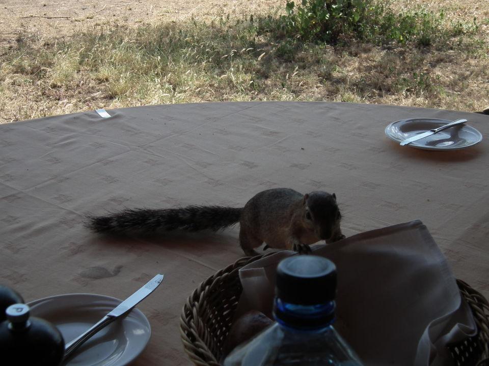 Kleiner Gast beim Essen Severin Safari Camp