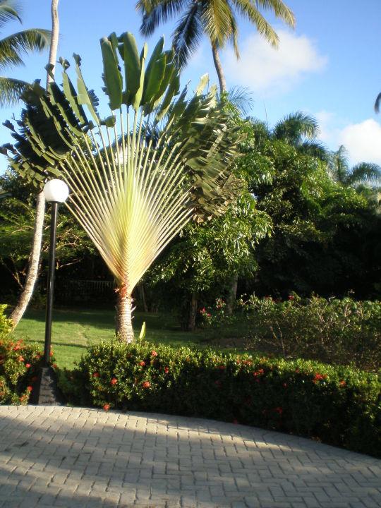 Spazieren Grand Bahia Principe El Portillo