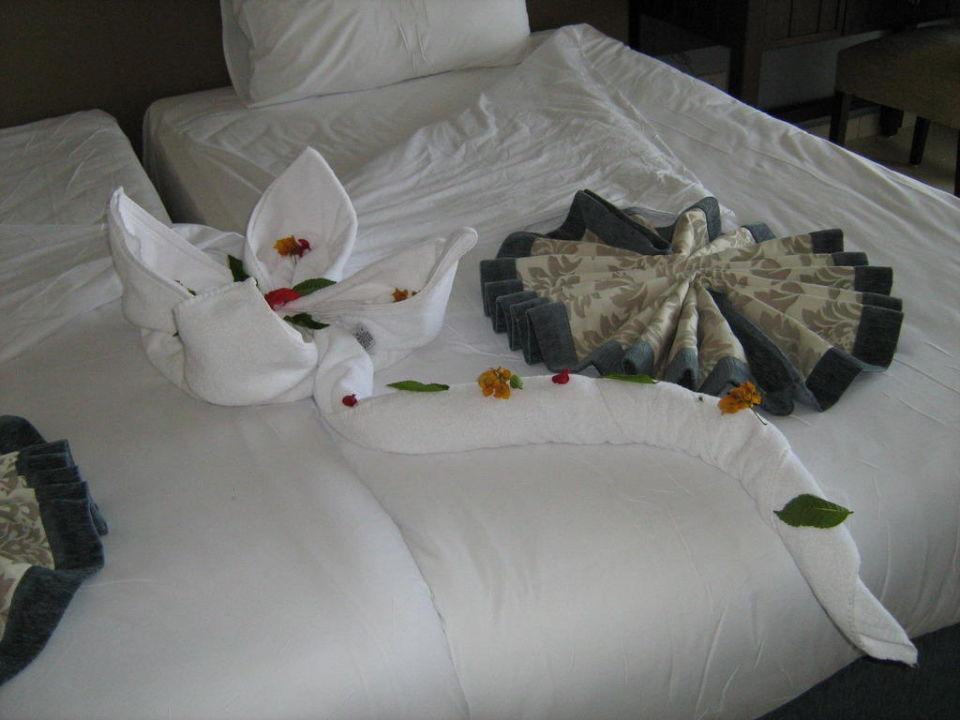 Schnorcheln Jaz Aquamarine Resort