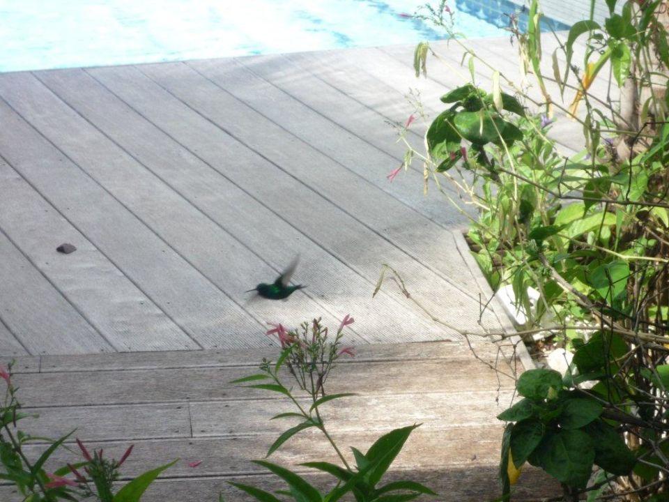 Kolibri Frangipani Apartments