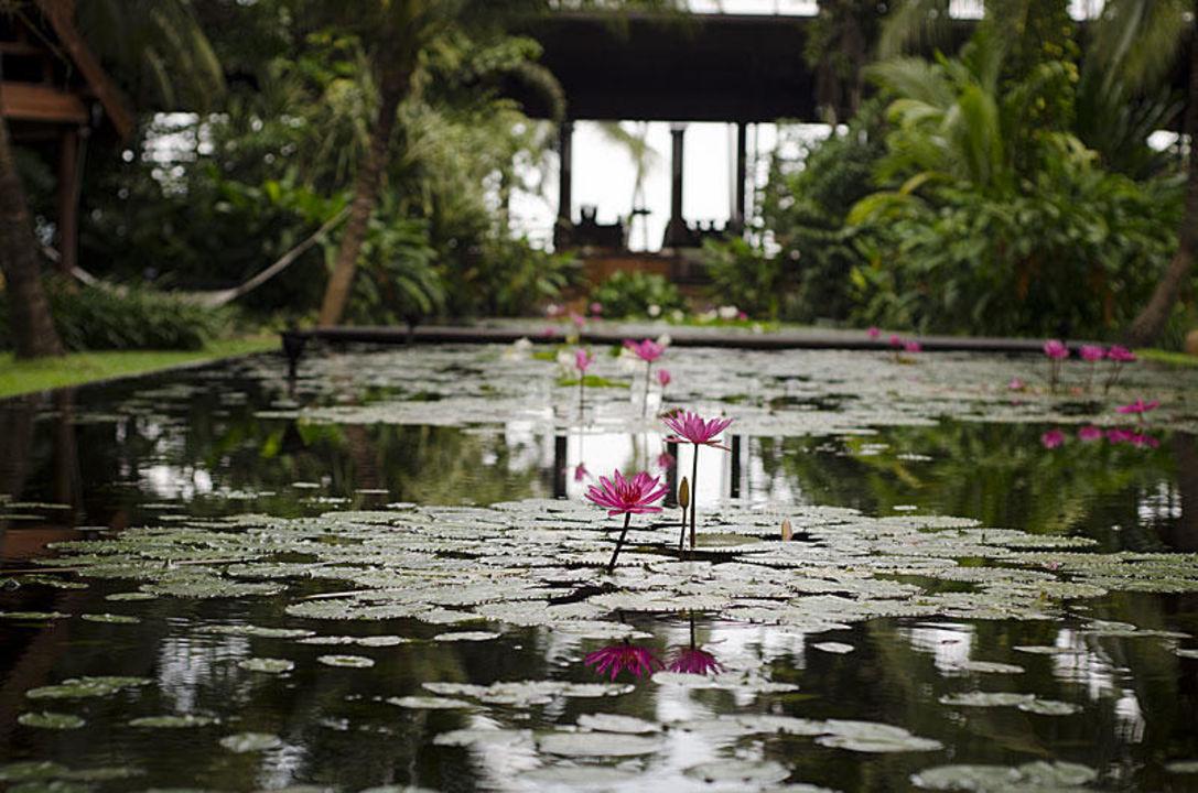 Lily Pond Anantara Bophut Resort & Spa