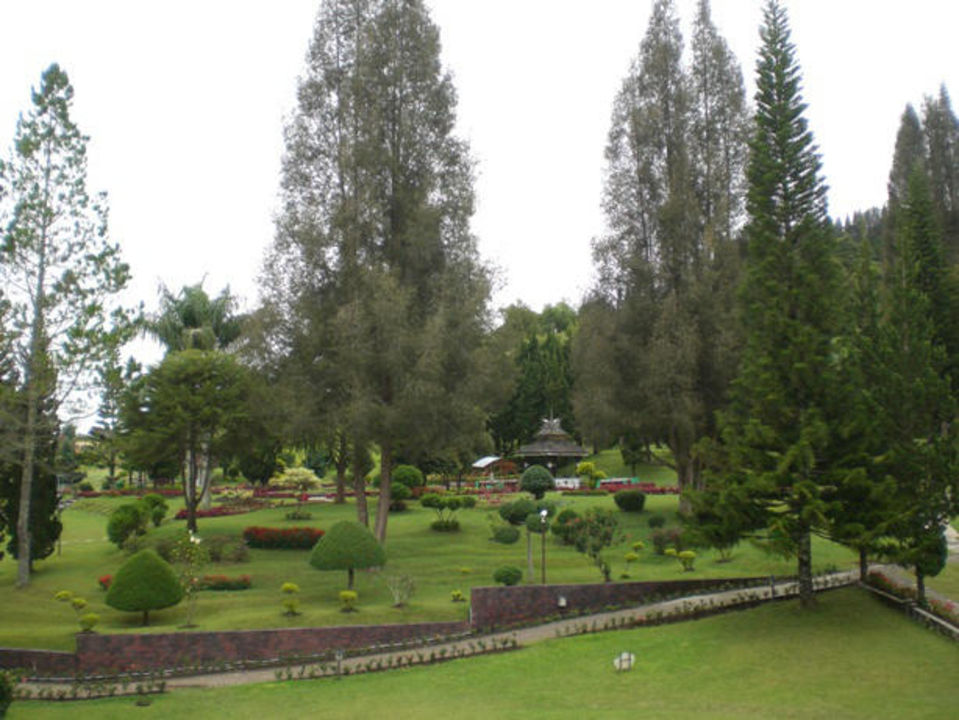 Kleine Muschi auf Stein sitzend im Garten Grand Mutiara Hotel & Resort