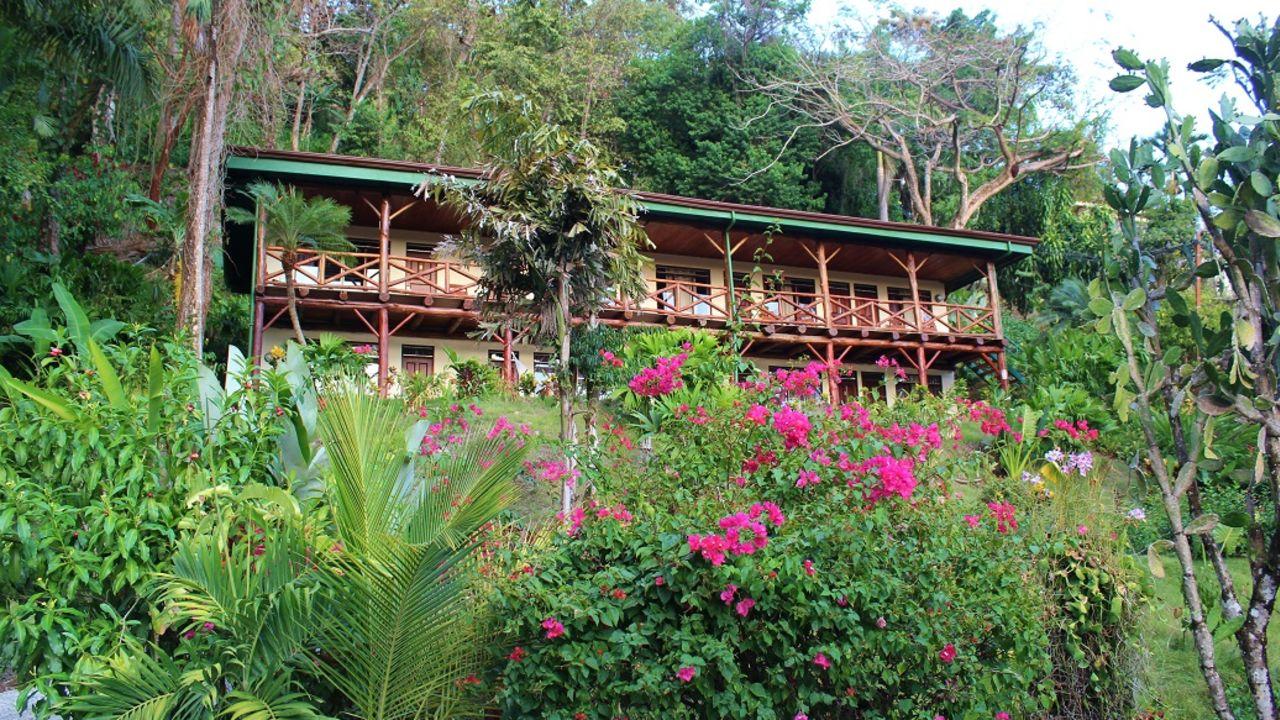 Tabulia Tree (Manuel Antonio) • HolidayCheck (Costa Rica ...