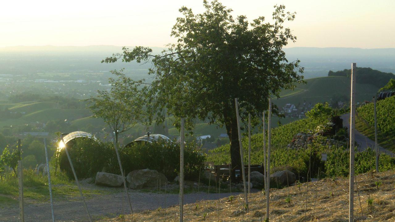 Ferienhof Wild (Sasbachwalden) • HolidayCheck (Baden-Württemberg ...