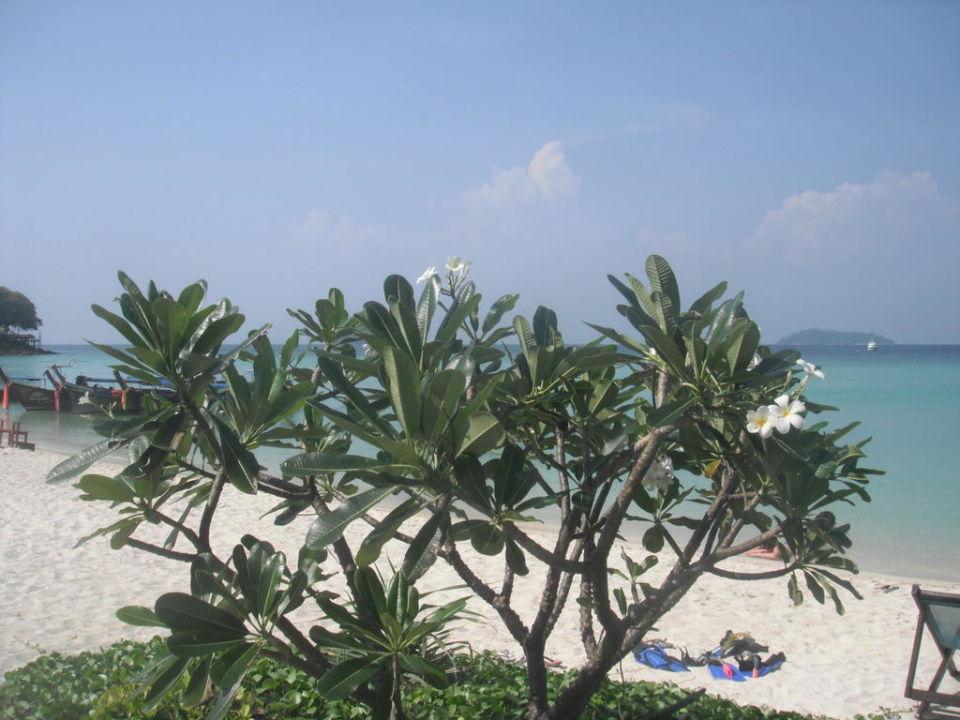 Strand Hotel Phi Phi Erawan Palms Resort