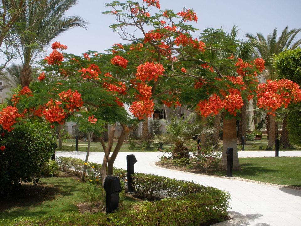 Garten The Grand Hotel