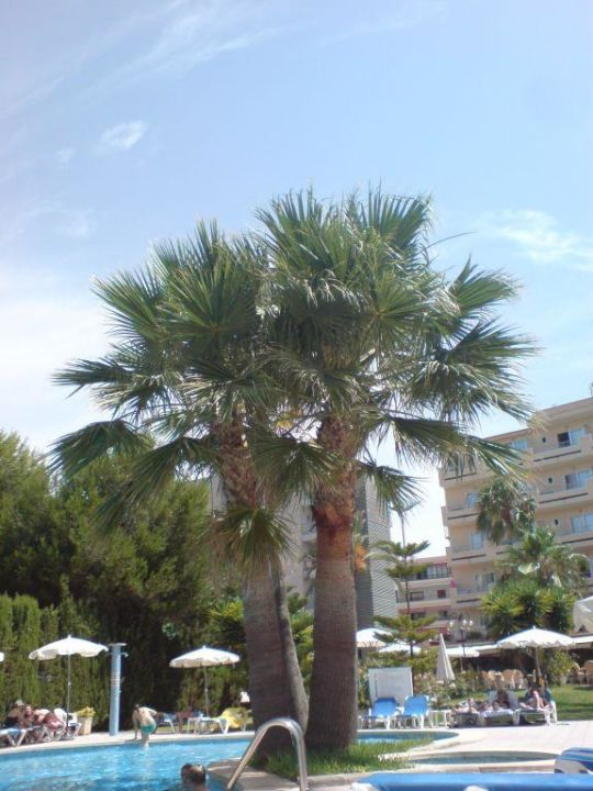 hotel pool mit palme hotel metropolitan playa platja de palma playa de palma. Black Bedroom Furniture Sets. Home Design Ideas