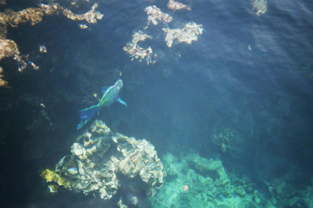 Fische Concorde El Salam Hotel Sharm el Sheikh
