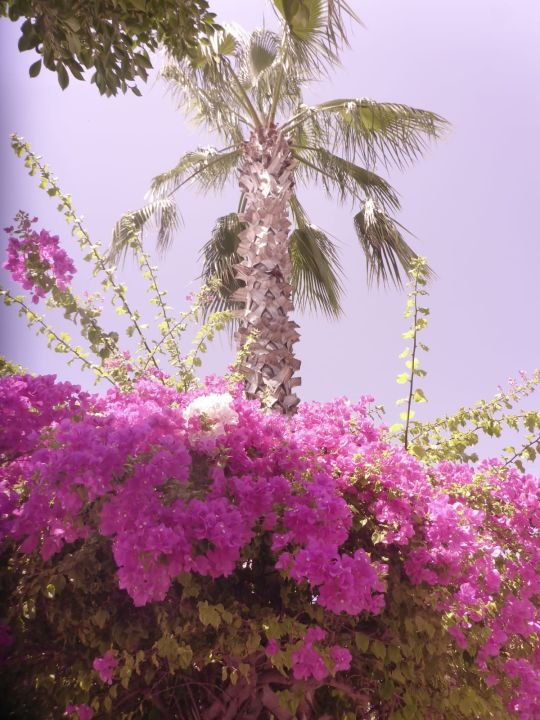 Gartenanlage TUI MAGIC LIFE Jacaranda