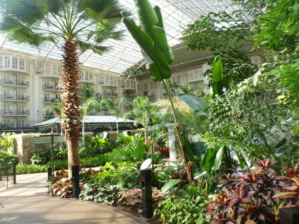 Indoor Garten indoor garten gaylord opryland hotel nashville nashville