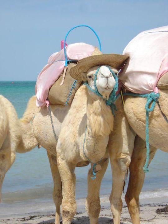 Kamel Hotel Fiesta Beach Djerba