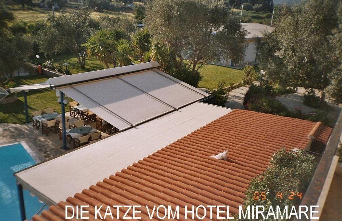 Aussicht zum Pool aus dem Zimmer 103 Hotel Miramare