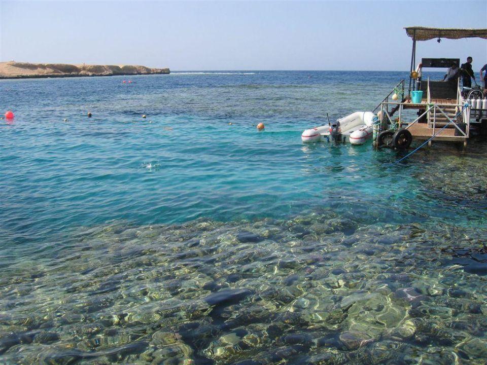 Opinion Iberotel coraya beach resort adults only opinion