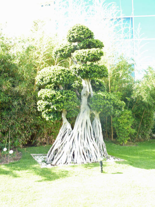 Fantastische Gartenanlage Hotel Concorde De Luxe Resort