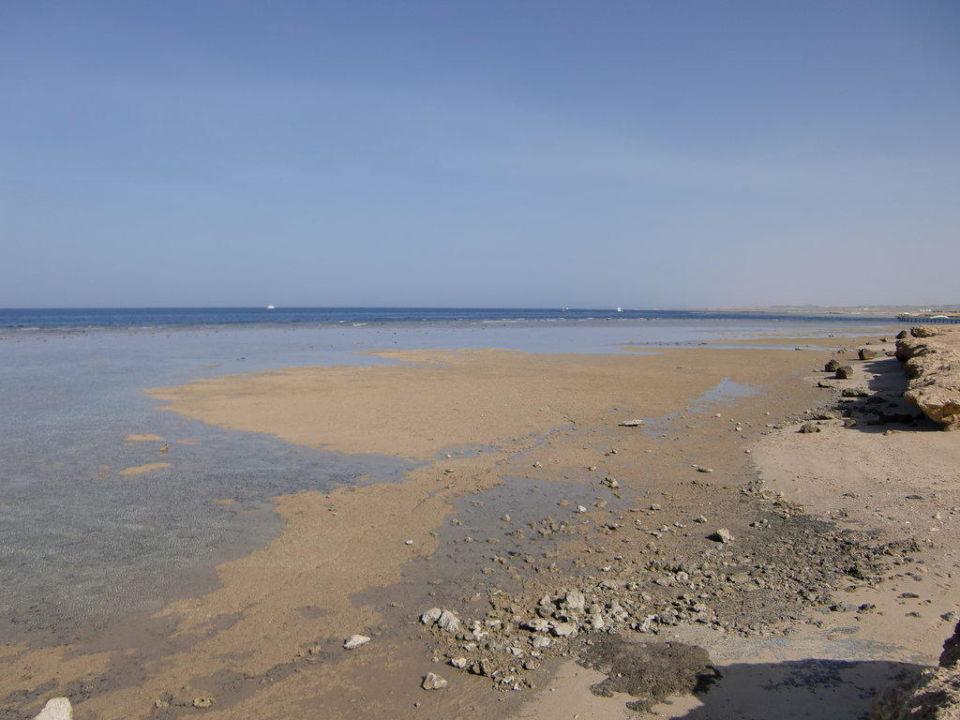 Strand bei Ebbe Siva Port Ghalib