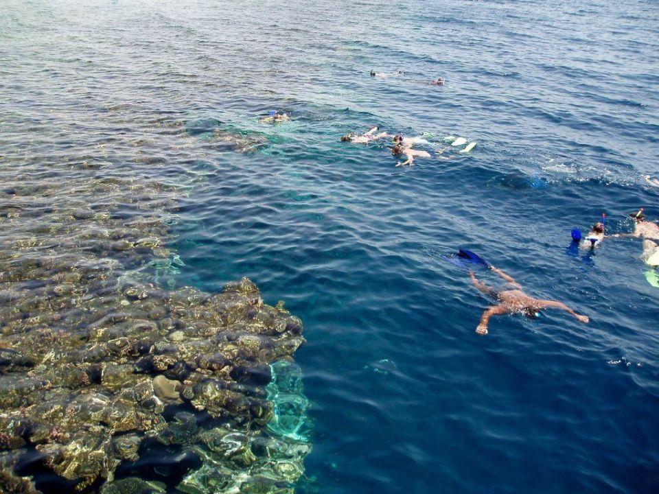 Schnorcheln TUI MAGIC LIFE Sharm el Sheikh