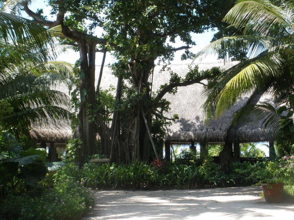 Haruge Restaurant Kuramathi Maldives