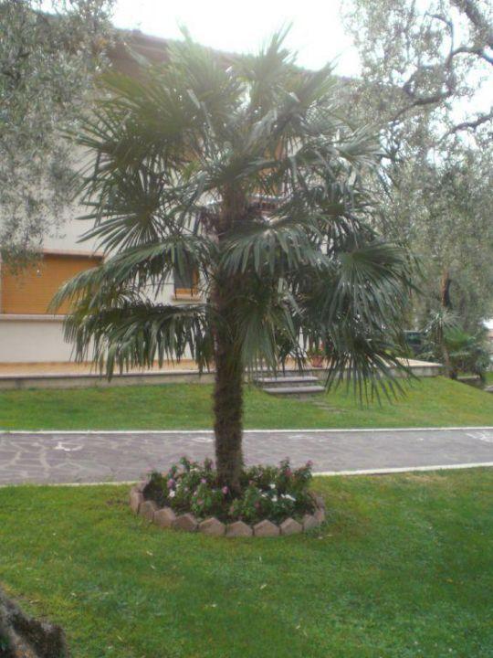 Im Garten Hotel San Carlo